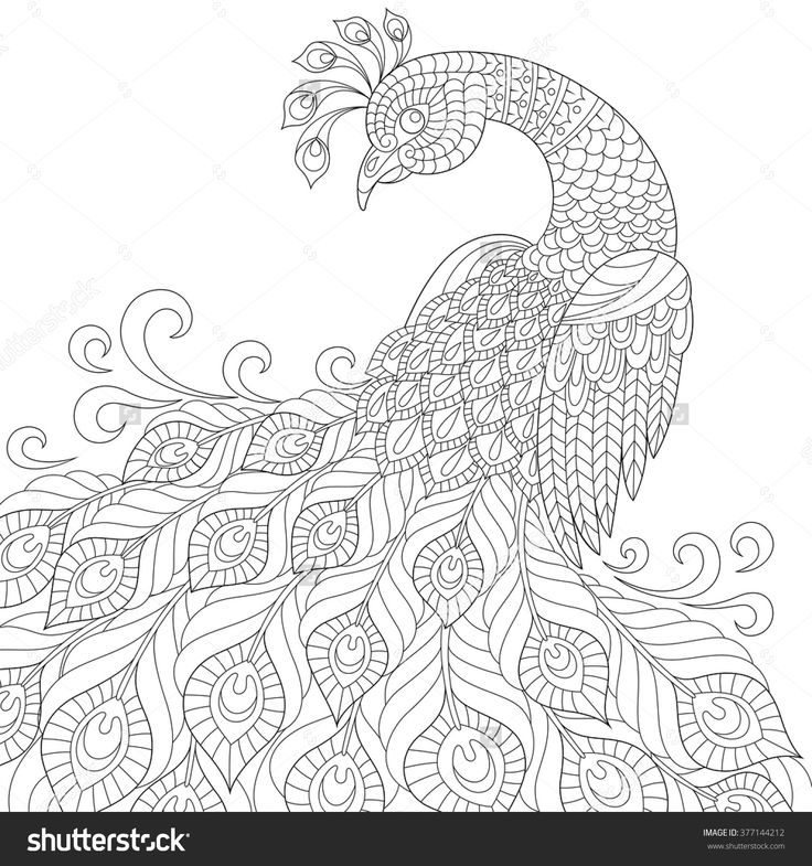 Decorative Peacock. Adult AntiStress Coloring Page. Black