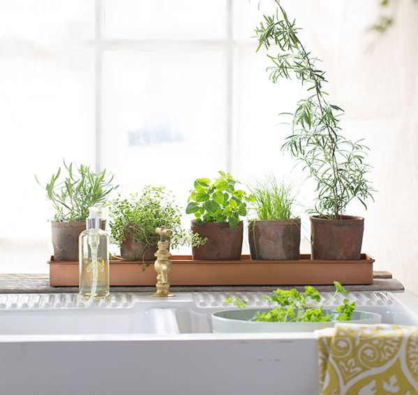 Our favorite trays are back in stock for indoor gardening at terrain.