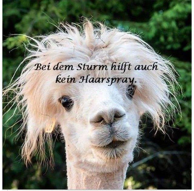 Pin Von Anke Seeliger Auf Spruche Haarspray Sturm Gute Witze