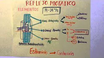 ARCO REFLEJO - REFLEJO MIOTÁTICO - YouTube