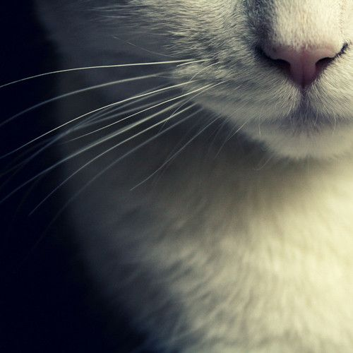 mjau: Kiss, Gifts Cards, Beautiful, Classic Style, Kitty, Weights Loss, Snow White, Cat Lady, White Cat
