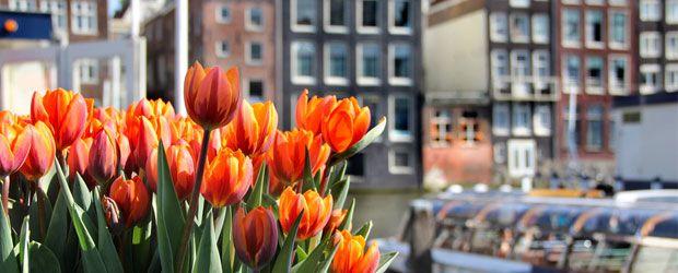 Tulp Festival Amsterdam 2015