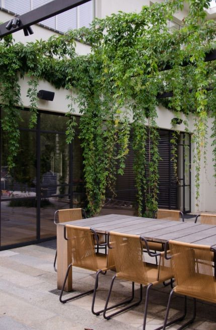 Virginia Creeper draped pergola | Eckersley Garden Architecture, Melbourne