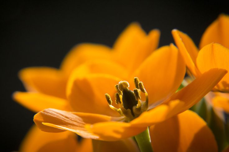 Star of Bethlehem by Anja Wessels on 500px