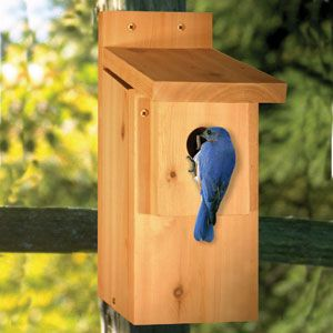 "Bluebird House DIY Woodcraft Pattern #2034 - Everyone loves bluebirds. Hang this bird house around your home and attract these beautiful birds to your neighborhood. 14""H x 5""W x 8""D   Pattern by Sherwood Creations #woodworking #woodcrafts #pattern #crafts #bird #birdhouse"