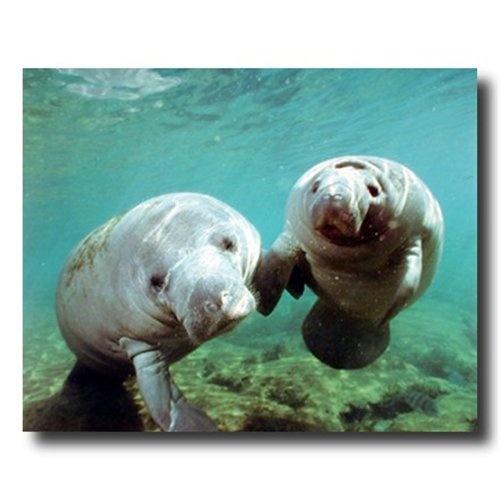 Manatees.: Crystals Rivers, Calm Manat, Sea Life, Manatee,  Dugong Dugon, Mammals Mantra, Mantra Blog, Animal, Marines Mammals