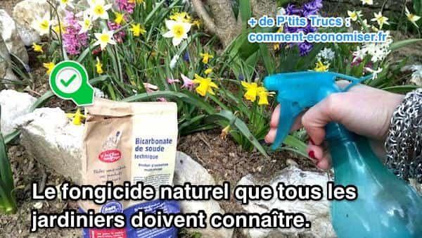 Avec le retour de la chaleur, les champignons peuvent proliférer dans le jardin et le potager. Heureusement il existe un fongicide naturel pour se débarrasser des champignons facilement sur les végétaux. L'astuce est de pulvériser de l'eau bicarbonatée directement sur vos plantes.  Découvrez l'astuce ici : http://www.comment-economiser.fr/bicarbonate-fongicide-naturel-pour-jardin-potager.html?utm_content=buffer9a567&utm_medium=social&utm_source=pinterest.com&utm_campaign=buffer