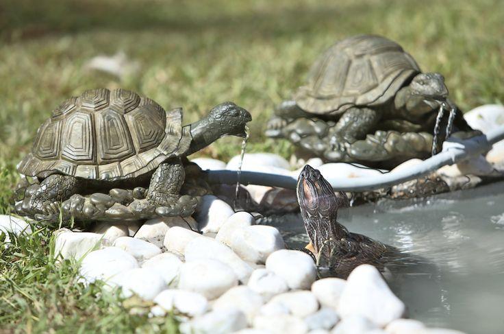 Decora tu jardín con una fuente en forma de tortuga.