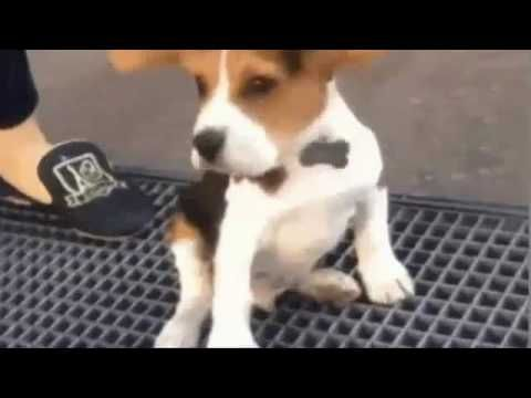 funny animals jokes video