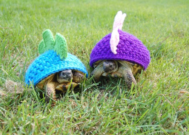 Dinosaur cosies - Now thats what you call a shell suit! These are the hilarious knitted cosies - designed just for TORTOISES. Tortoise-lover Katie Bradley started crocheting wooly designs for her seven pet tortoises as a family joke. But after posting pictures of the cosy critters on her tortoise blog, she was soon inundated with requests to make them for tortoises around the globe.