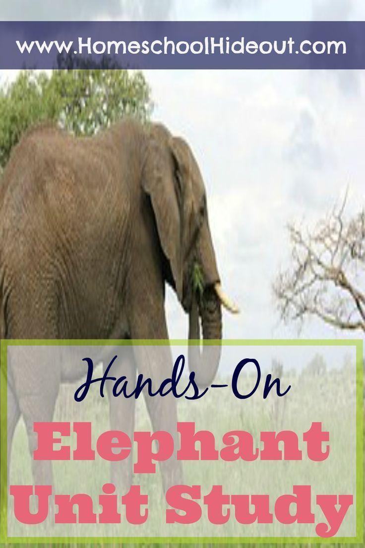 60 besten Safari Bilder auf Pinterest   Elefanten, Safari und Tier ...