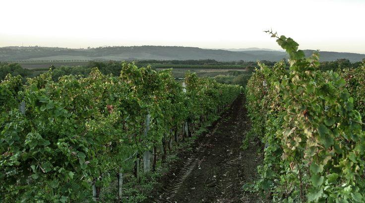 Виноградники долины Лефкадия