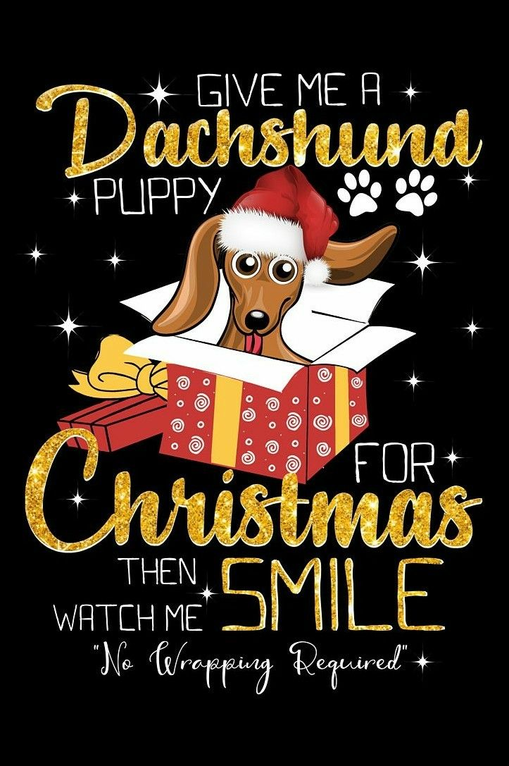 Christmas Baby Dachshund Dachshund Christmas Funny Dachshund