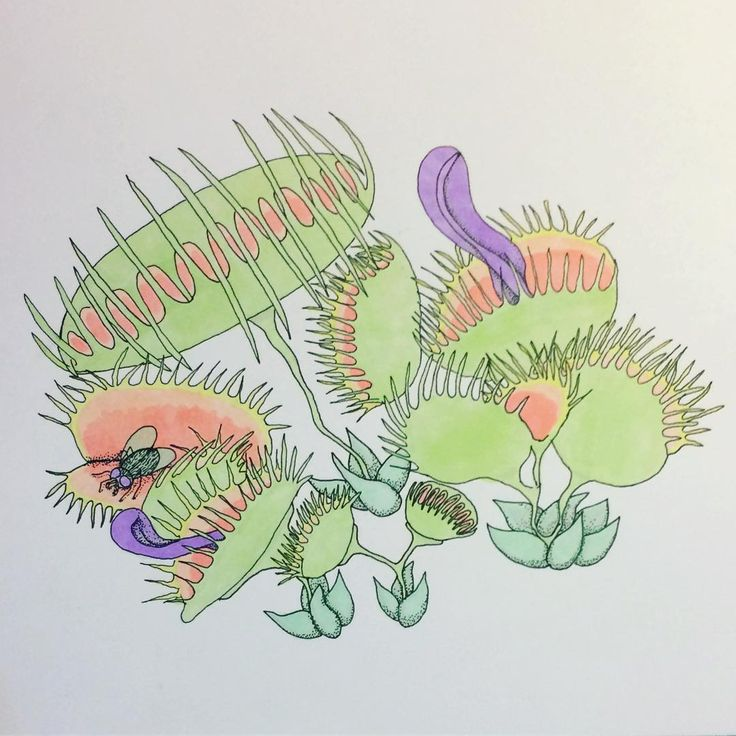Monstrous Venus Fly Traps for Inktober 2016.