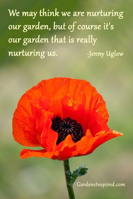 """""""We may think we are nurturing our garden, but of course it's our garden that  is really nurturing us."""" Jenny Uglow"""