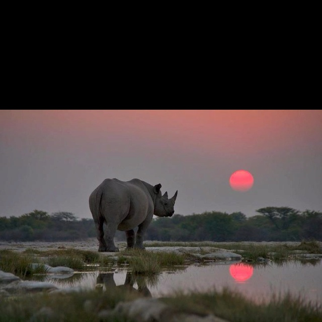 Could there be a more magnificent sight? Photo courtesy of Extinction Sucks.Etosha National, Travel Planners, Black Rhino, Sunsets, Beautiful, South Africa, Wildlife, National Parks, Animal