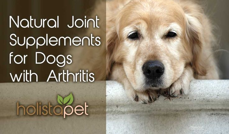 As our dogs age so does their bones and joints. A natural diet is vital to reduce the pain and inflammation caused by Arthritis. Learn how to provide Natural Joint Supplements like #CBDfordogs in this article here: http://bit.ly/2orOgJP