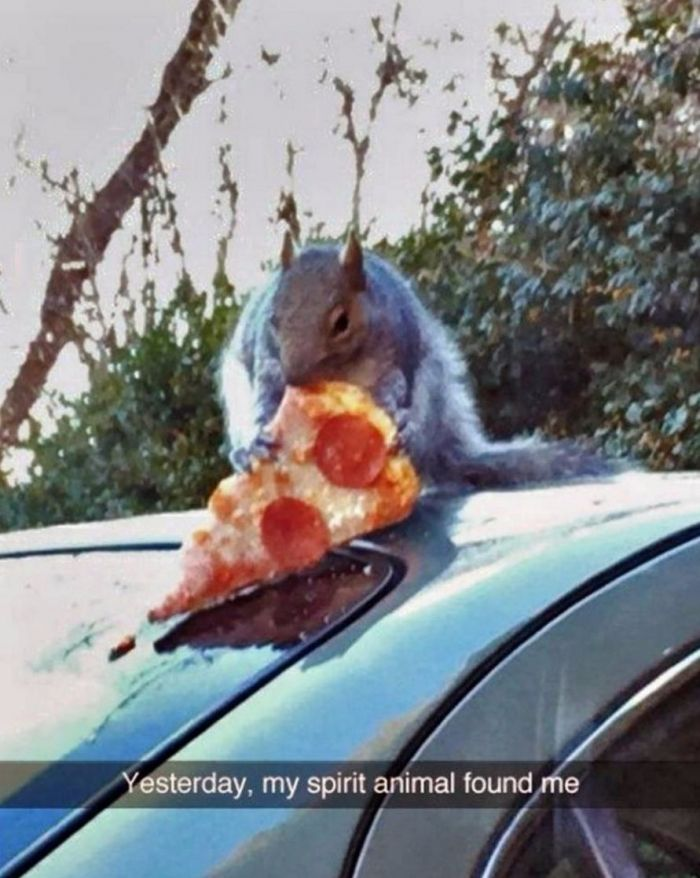 This squirrel knows