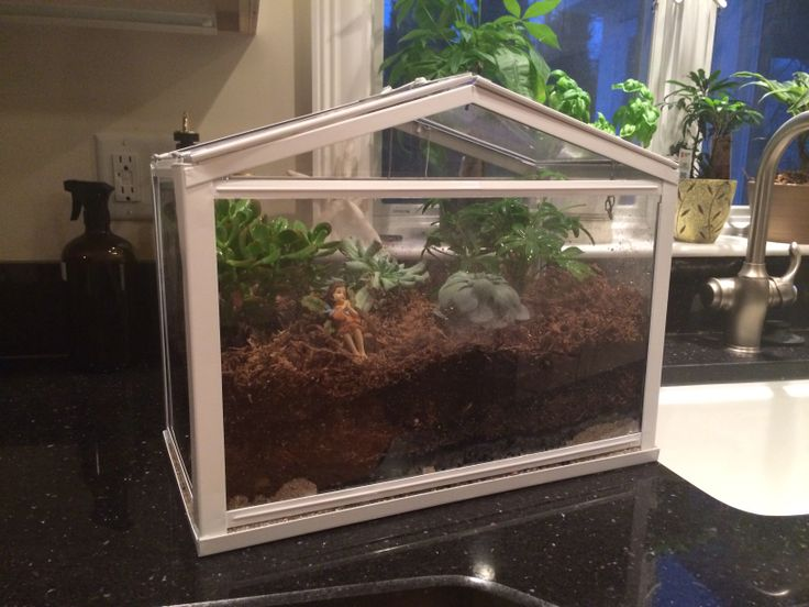 My First Try At A Terrarium (purchased At IKEA)