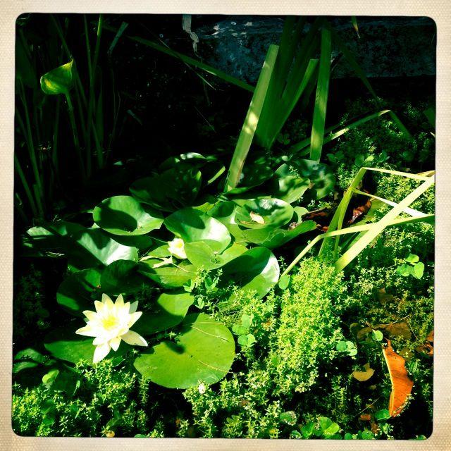 Plants at Montsalvat