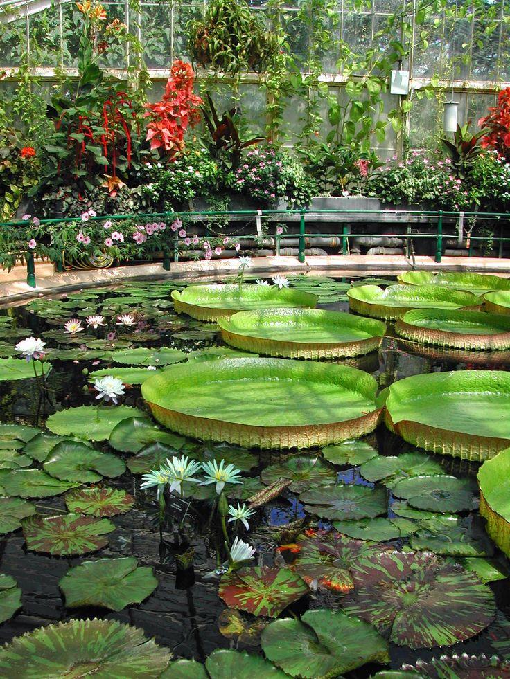 #London #kewgardens #waterlily
