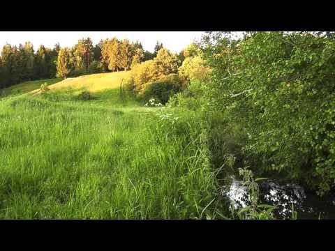 река, поле, лес - футаж hd - YouTube