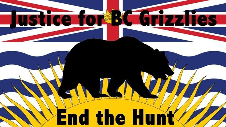 Take the Pledge to end the Grizzly Bear hunt in BC!
