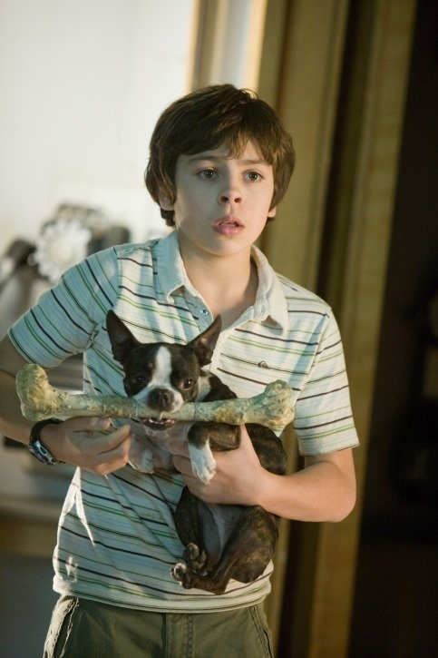 Jake T Austin And The Boston Terrier I Loved The Bostons In This