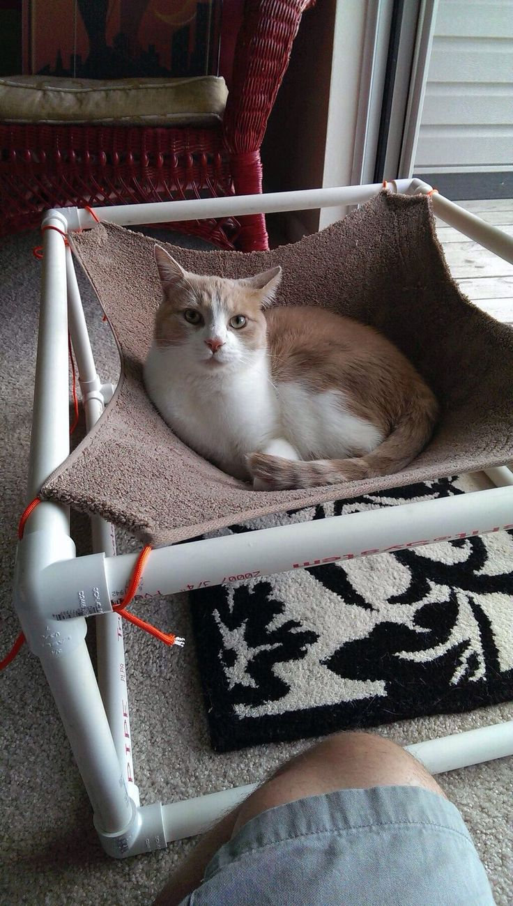 62 best images about pvc camas on pinterest homemade for Pvc cat bed