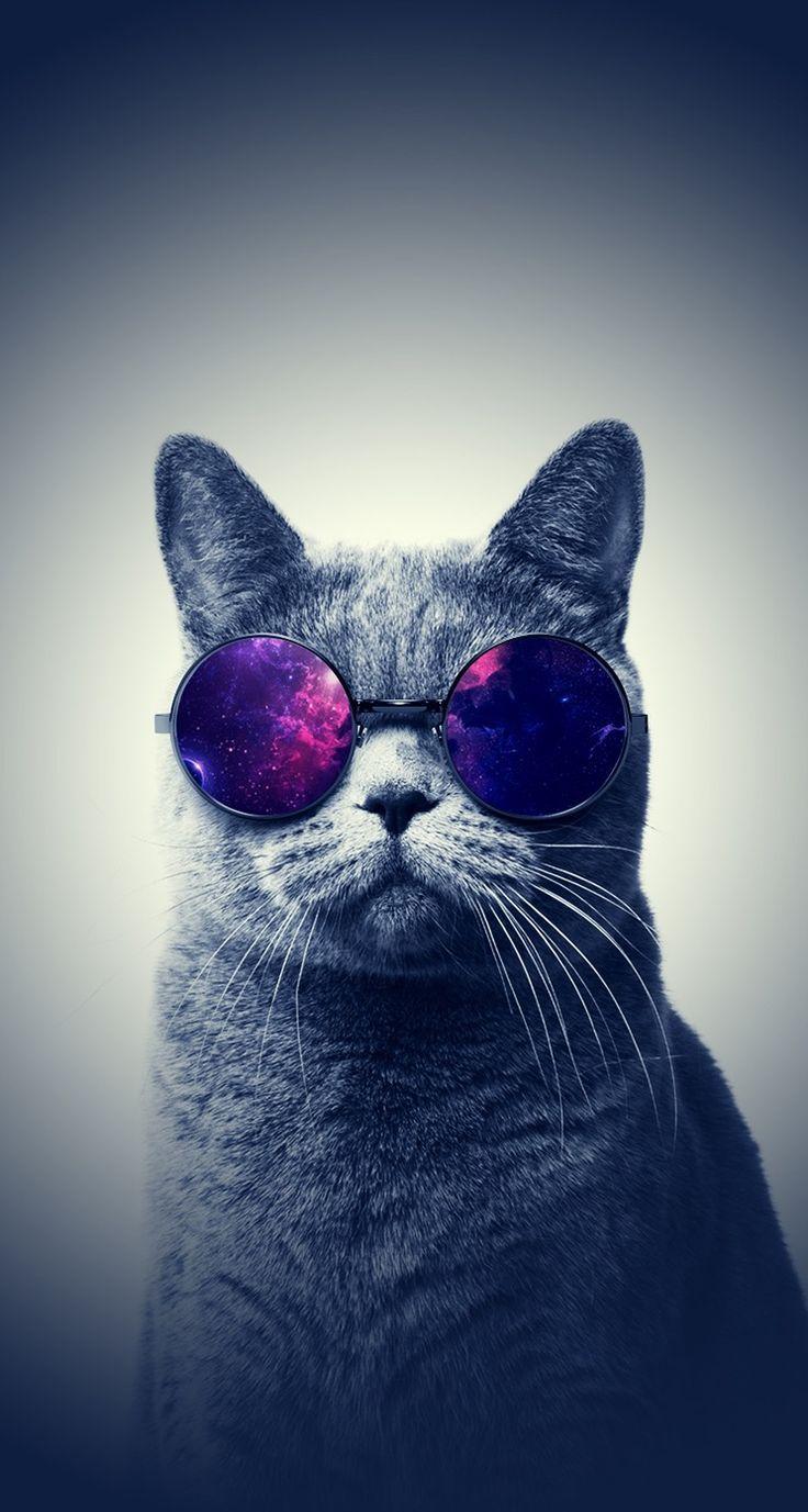 Papéis de parede para celular de gatos gatos pinterest