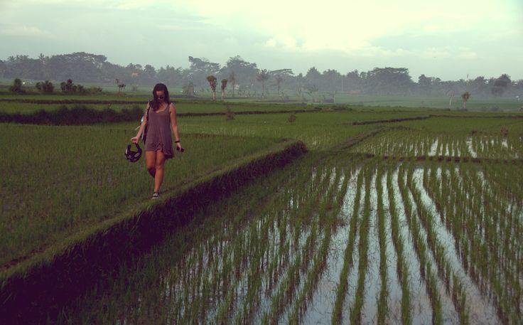 Ubud's rice field. Bali.