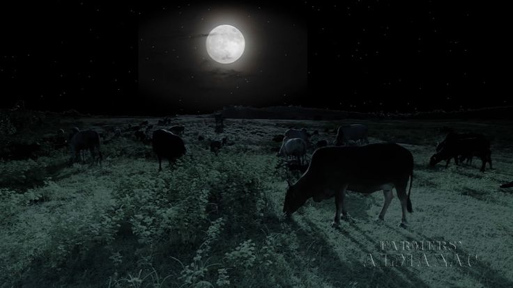 """Video: Find out why May's Full Moon is called the """"Flower Moon,"""" among other names, in this exclusive Farmers' Almanac video! #May #moon #flowermoon"""