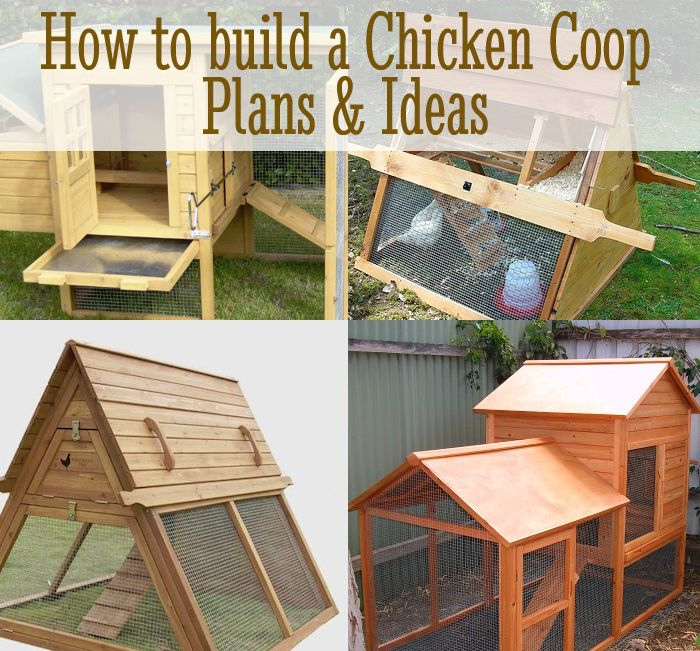 diy chicken coop plans ideas