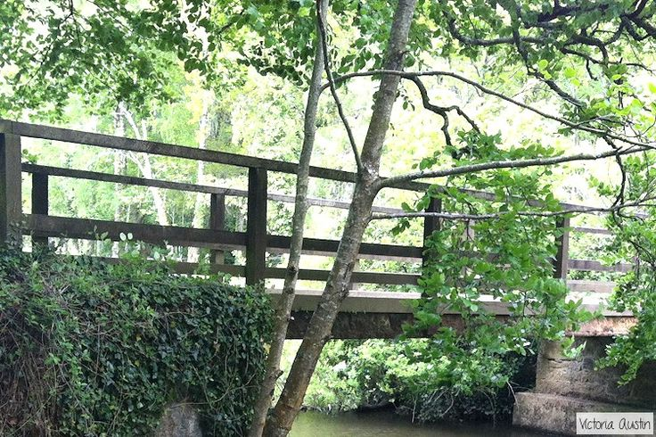 Bridge, trees, shrubbery at Stover Country Park