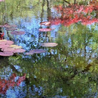 #waterspiegeling #abstract #fotografie #kunstfotografie #impressionisme #tuinen #gardens