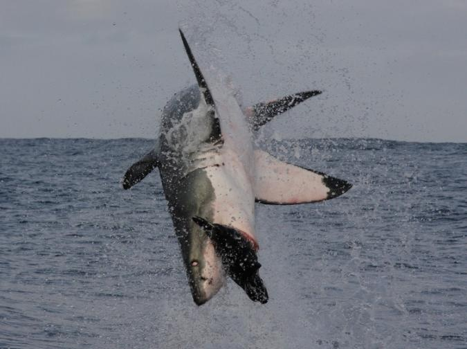 """This site has awesome shark activities. Great  for your own """"Shark Week"""" :)"""