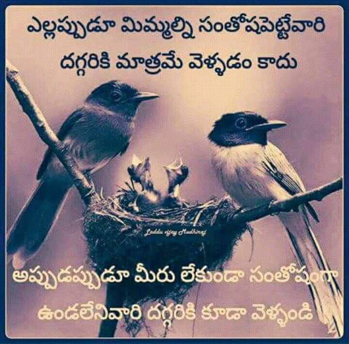 291 Best Images About Telugu Quotes On Pinterest
