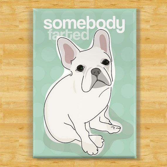 French Bulldog Magnet  Somebody Farted  White French by PopDoggie, $5.99