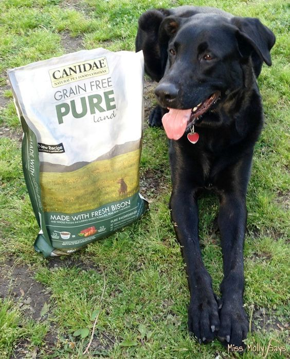 CANIDAE® Grain-Free Pure® Dog Food for a Healthy Happy Dog! #HealthyPetHappyPet