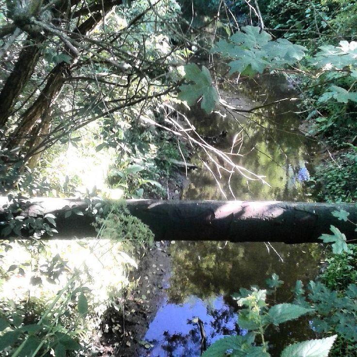 #rów #rówodwadniający#rura #chwasty #pipe #drain #wildplants