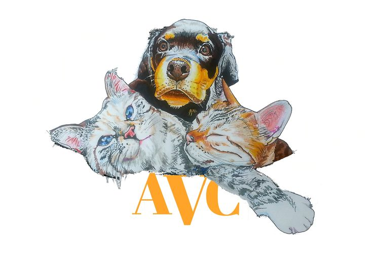 Our current #logo, we are brainstorming some new ideas. This one was hand drawn by a local artist. See more of her work @snicholsonco #graphicdesign #art #vet