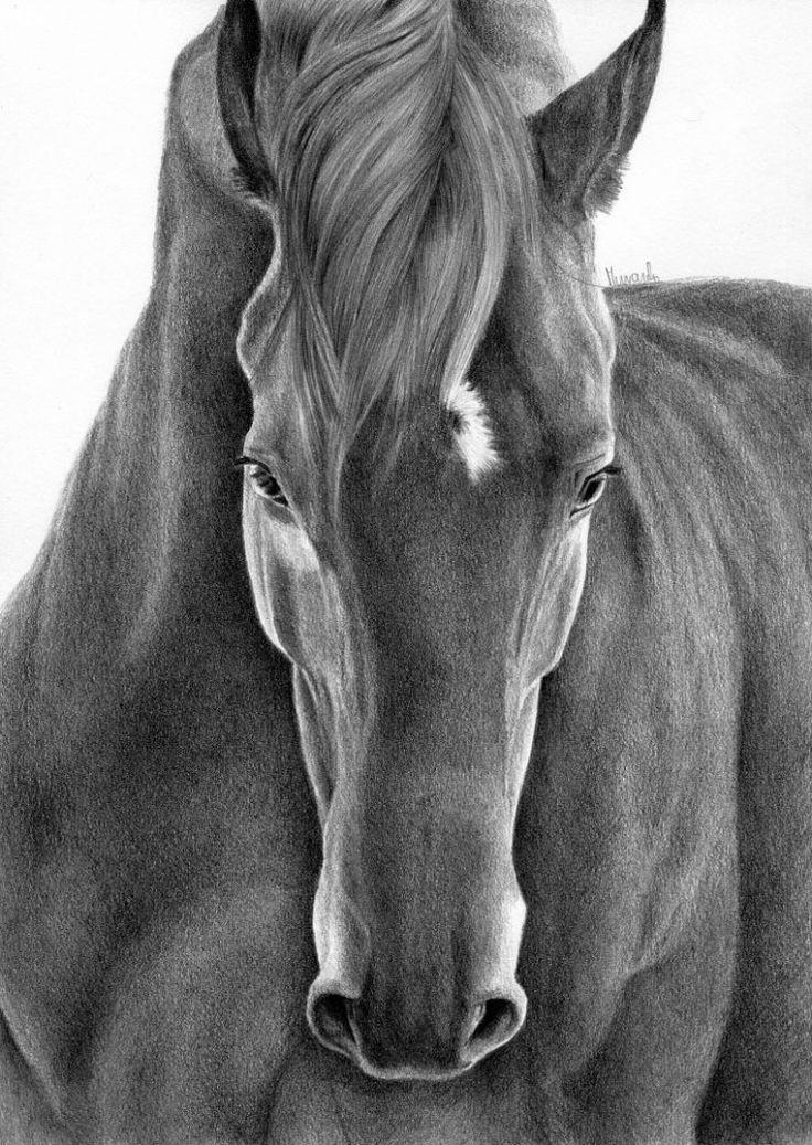 Rysunek konia en face