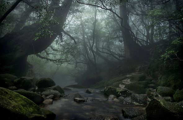 """In Japan's epic anime film """"Princess Mononoke,"""" director Hayao Miyazaki shrouds the real-life island of Yakushima with surrealism. Yet this wraithlike landform scarcely needed the extra intrigue. Twenty years ago, the site became one of Japan's first entries on the UNESCO World Heritage List."""