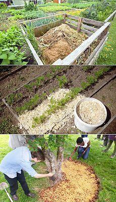 Опилки для удобрения и мульчирования почвы: способы и принципы применения