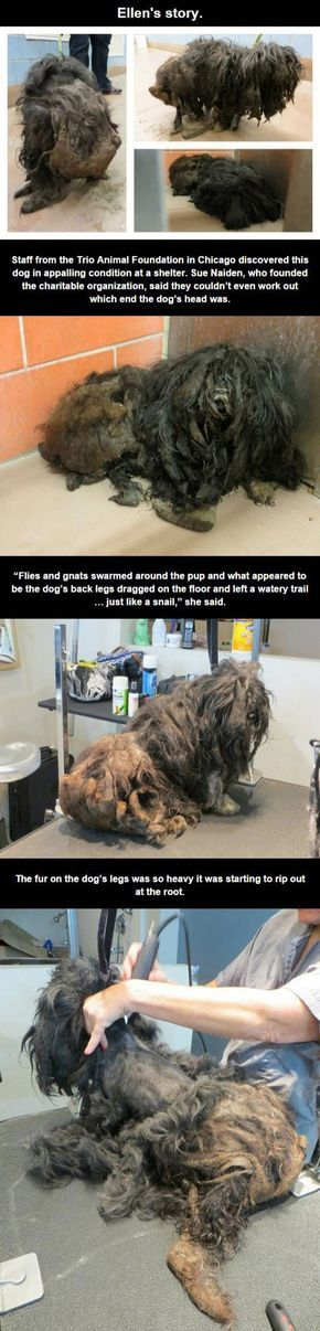 The Rescue Of Ellen The Hairy Dog