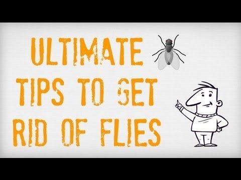 ULTIMATE Tips on How to Get Rid of Flies | Getting Rid of Flies Inside and Outside | Fly Traps