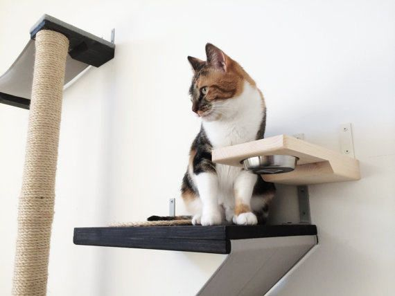 This is our 1st generation Cat Feeder. If you would like to see the 2nd generation Feeder, which works with our cat mod attachment options, here is a link: www.etsy.com/listing/505028353/the-cat-mod-feeder  -A great addition to any wall set up. -Allow your cats to eat up high, where they can observe their environment and feel safe -Keeps dogs out of cats food -Tip-proof food dish -Solid wood  Our cats love eating their dinner up above with this Mini Add-on Cat Feeder. This piec...
