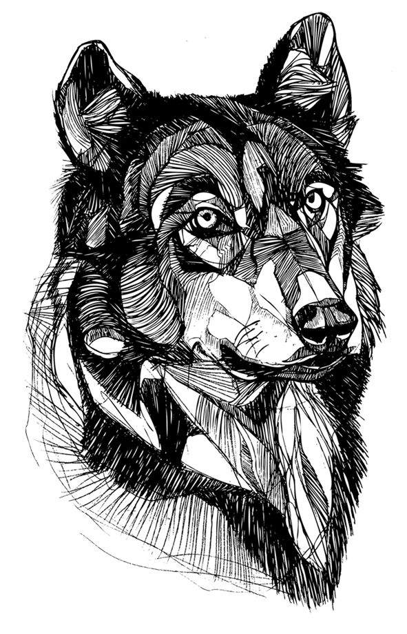 Best 25 wolf head drawing ideas on pinterest how to draw wolf would love to try this style of drawing ccuart Choice Image