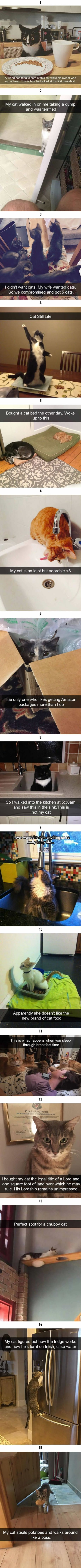 15 Funny Cat Snapchats You Can't Miss