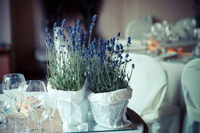 Lavender plants centerpieces - rustic chic wedding...a bit shabby as well!    Centrotavola con piantine di lavanda - matrimonio rustico, un po shabby chic....